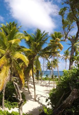 Cocotier sur la plage aux Antilles Noce de rêve by Flovinno