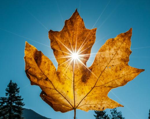 Feuille d'érable symbole du Canada Noce de Rêve by Flovinno