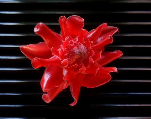 Fleur rouge à Bali Noce de rêve by Flovinno