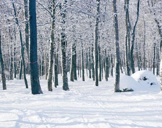 Forêt enneigée au Canada Noce de rêve by Flovinno
