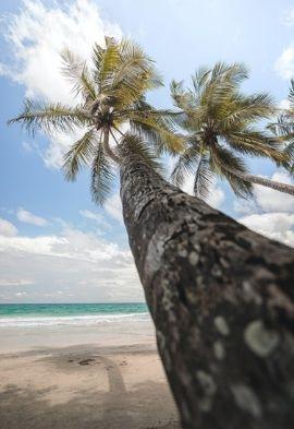 Palmiers aux Antilles Noce de Rêve by Flovinno