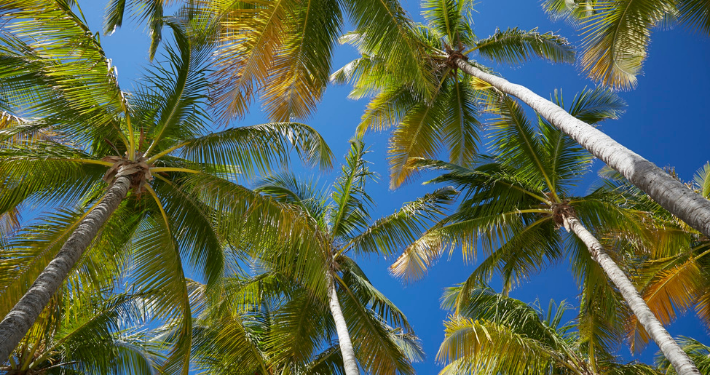 Palmiers en Guadeloupe Noce de rêve by Flovinno