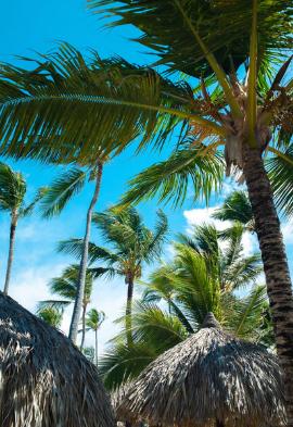 Palmiers à Punta Cana Noce de rêve by Flovinno