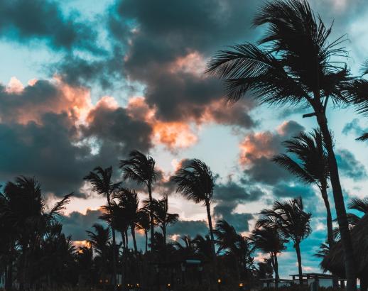 Palmiers et nuages à Punta Cana Noce de rêve by Flovinno
