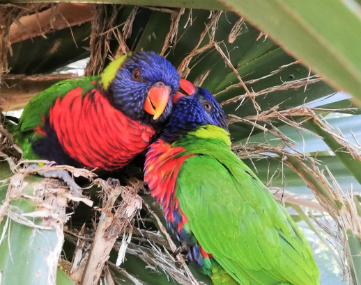 Petits perroquets colorés aux Antilles Noce de Rêve by Flovinno