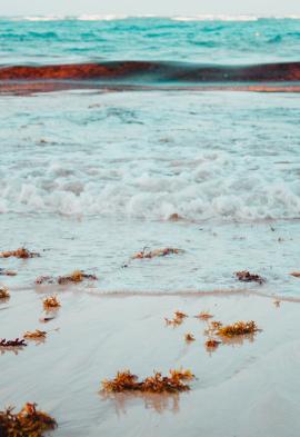 Ecume sur la plage à Punta Cana Noce de rêve by Flovinno