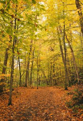 Québec en automne Noce de rêve by Flovinno