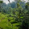 Rizière à Bali Noce de Rêve by Flovinno