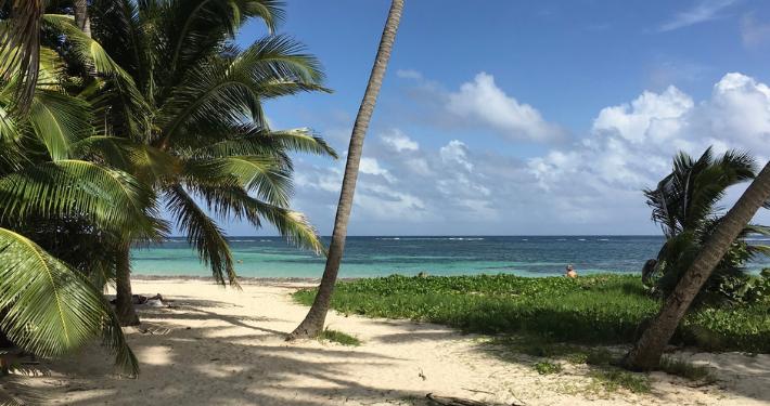 Vue mer avec palmiers en Martinique Noce de Rêve by Flovinno