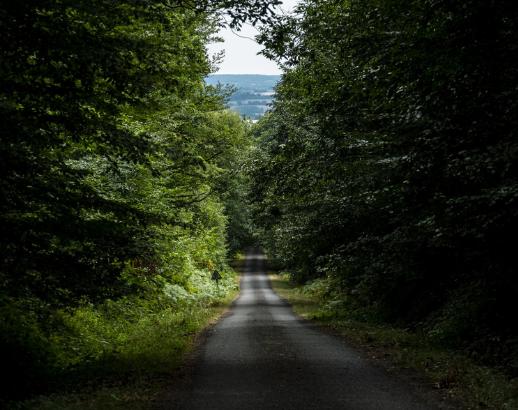 Normandie forêt Noce de Rêve by FLOVINNO
